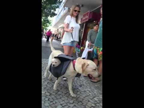 Koerapere jalutuskäik