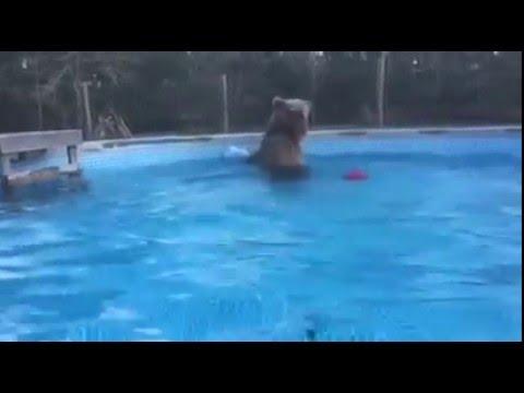 Lemmiklooma jahutamine