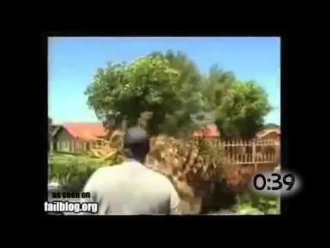 Valesti langetatud puud