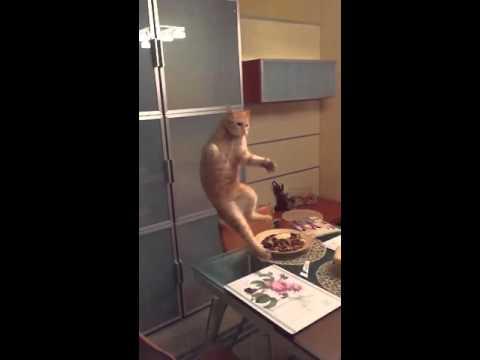Kass kärbse vastu